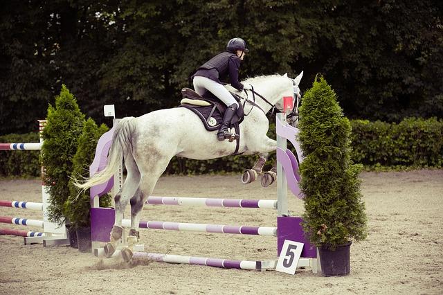 kůň skáče přes překážku
