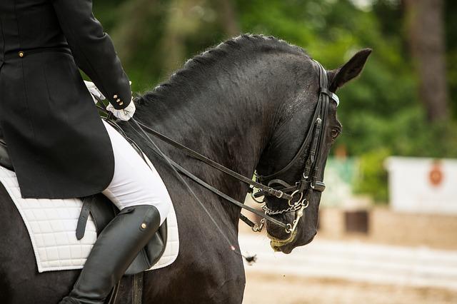 kůň s jezdcem